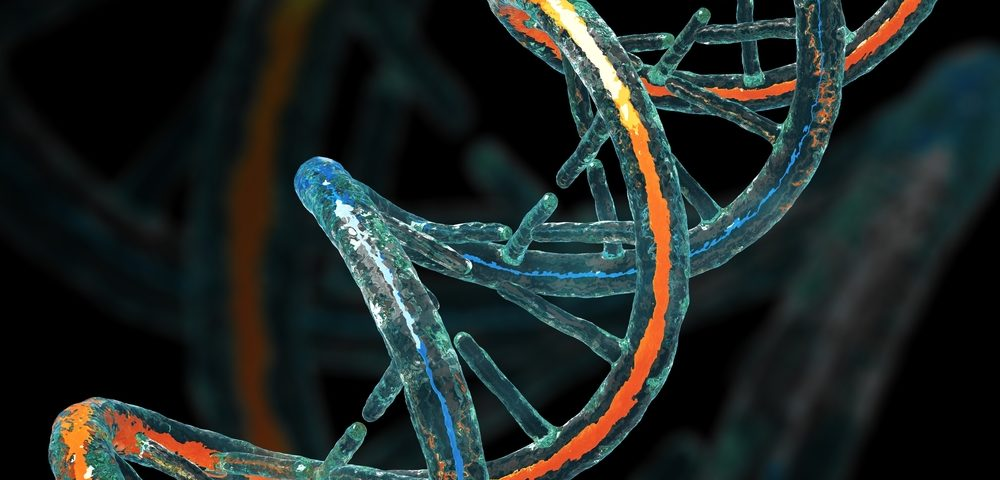 Frataxin Gene Required for Genome Stability in Friedreich's Ataxia Cells, Study Finds
