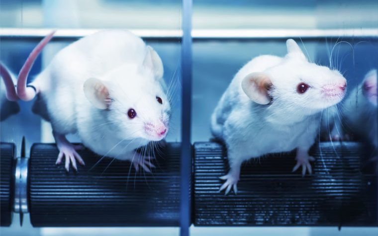 mouse model of disease
