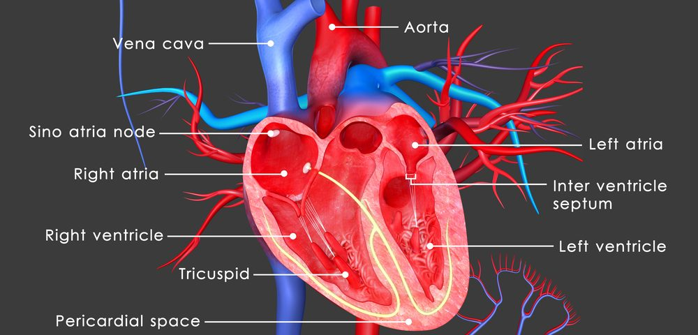 #IARC2017 – GAA Repeats May Be Cause of Smaller Left Ventricle in Adults with FA