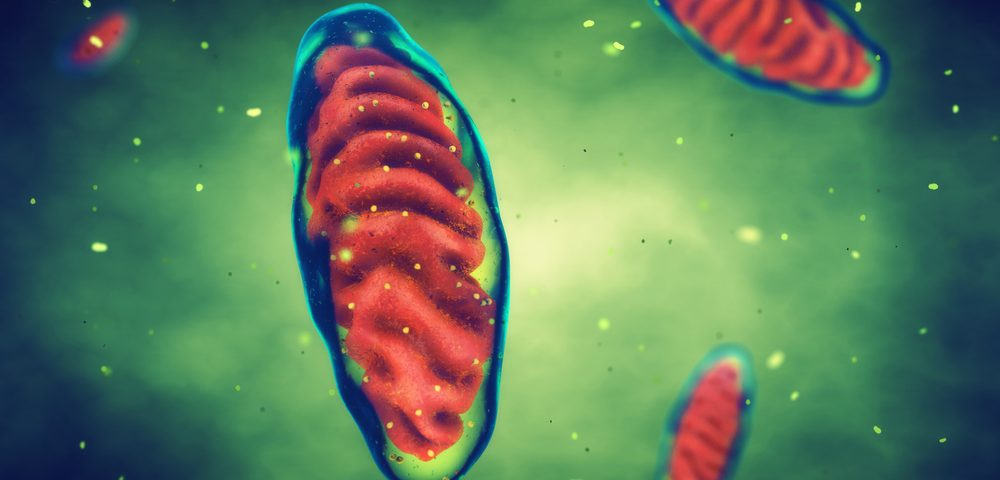 #IARC2017 – Mitochondria, Deprived of Frataxin Protein, Fail to Control Free Radicals in Cells, FA Study Finds
