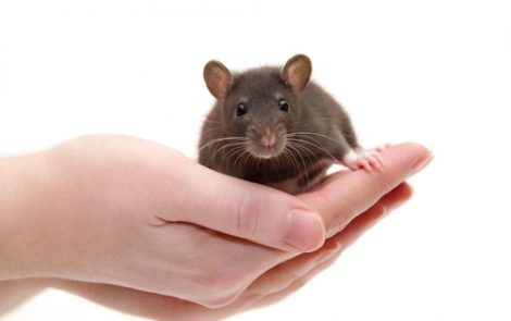 Engineered Frataxin Protein Improves Lifespan of Mice with Friedreich's Ataxia, Study Shows