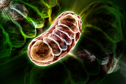 Early Targeting of Mitochondrial Dysfunction May Help FA Patients, Study Suggests