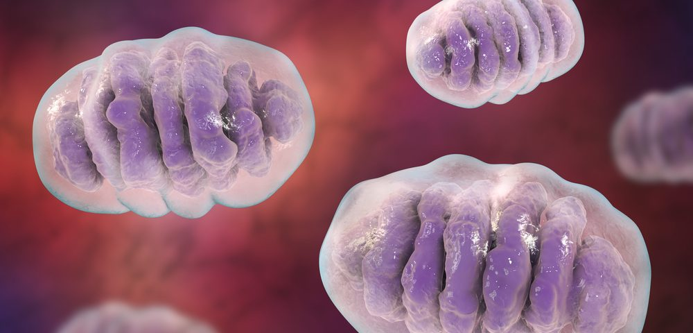 Early Loss of Cerebellar Mitochondria May Drive Disease in FA, Mouse Study Suggests